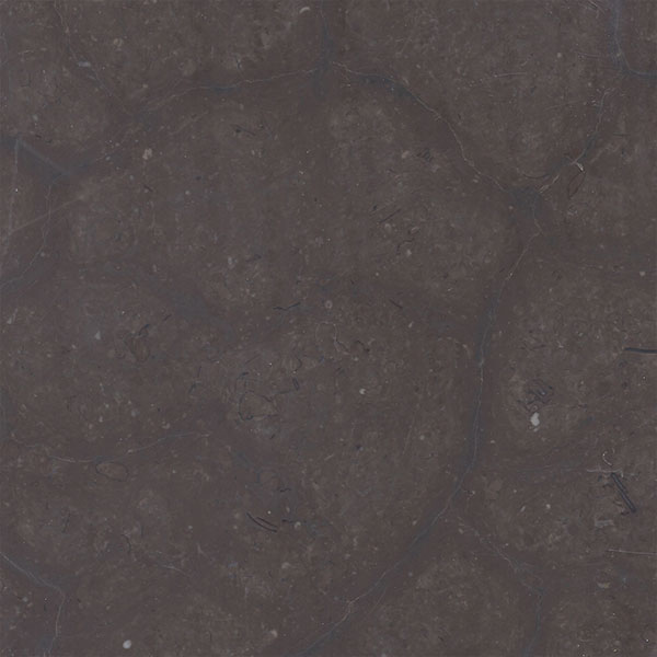 Grand Tortoise Limestone - Honed